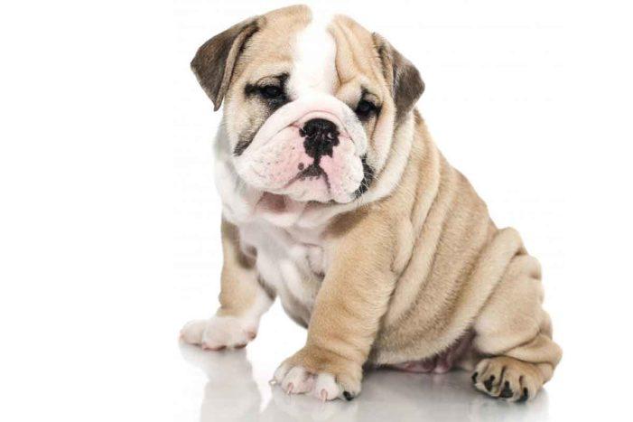 Jak potěšit vašeho čtyřnohého přítele? Kvalitním krmivem pro psy!