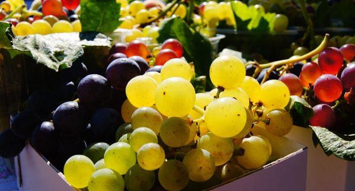 O víně toho známe hodně, ale víme, jak se pozná opravdový burčák?